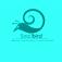 snailbird_6